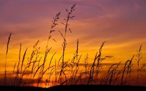 6908118-sunset-sky-grass
